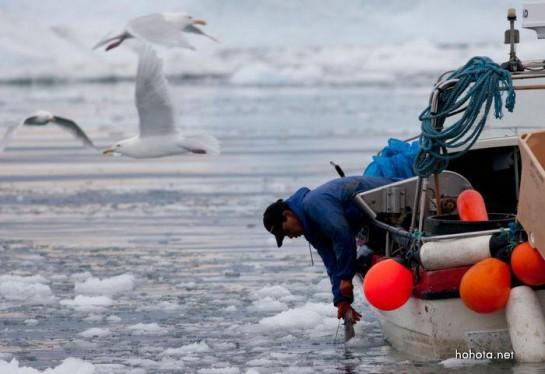 В последние годы с экономическими проблемами сталкивается основная отрасль гренландской экономики – рыболовство. А в ней заняты до 90% трудоспособного населения. И этот фактор тоже способствовал сокращению поддержки правивших левых социалистов