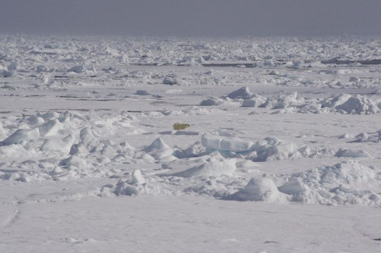 Ледовые условия, по данным разведки, в том числе спутниковой, более чем благоприятны, а американцы уверяют, что у них всё готово к последнему рывку