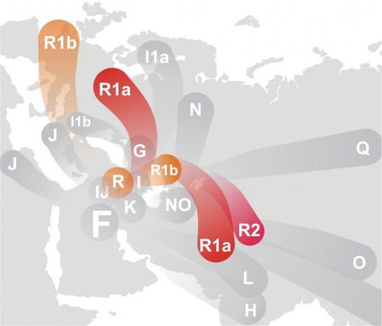 Представители разных подгрупп (нижних - ближе к нам по времени, но восходящих к общему предку для каждой) базовых R1a и R1b расселялись по нескольким направлениям: на восток и на запад