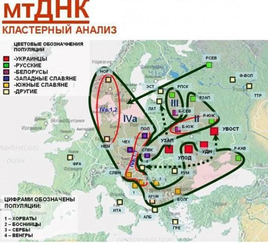 А вот третья схема максимально лукава. Если на двух предыдущих четыре украинские популяции попадали в один ареал, то здесь они разделены аж на четыре
