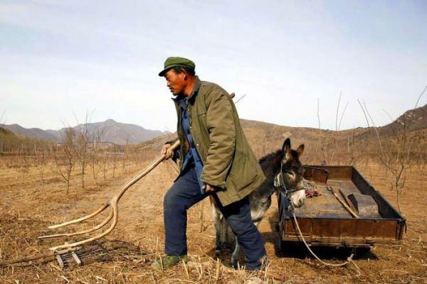 Только в Еврейской автономной области администрация провинции Хэйлунцзян арендует 430 тысяч гектаров пахотных земель. Фото: David Gray/Reuters