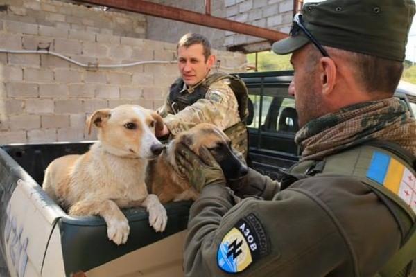 Бойцы украинского добровольческого батальона «Азов» в городе Черкассы взяли бродячих собак под свою опеку, для чего они создали специальную горячую линию