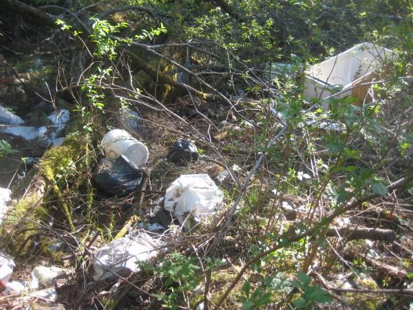 Когда люди выбрасывают старое тряпьё, их ещё можно оправдать — рано или поздно оно сгниёт. А вот на что рассчитывают граждане, вынося в лес старый холодильник или телевизор?
