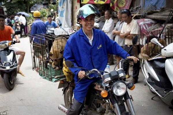 Фестиваль по поеданию собачьего и кошачьего мяса - древний и традиционный для китайцев. Он ежегодно проходит в честь летнего солнцестояния