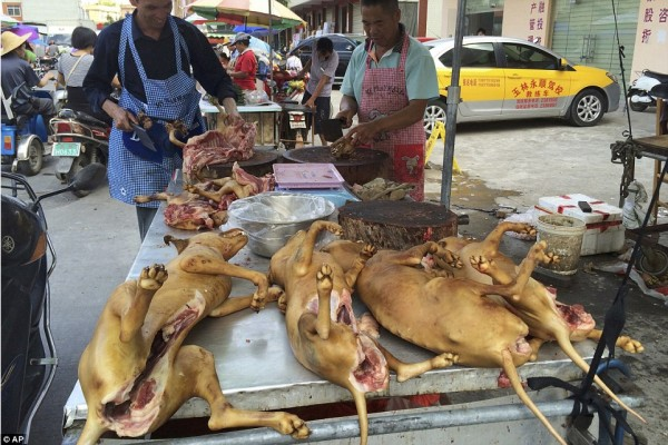 """""""Собаки - живые существа с мыслями и чувствами - и пытки, которым они подвергаются на этом фестивале, ничем нельзя оправдать», - объясняют авторы петиции"""
