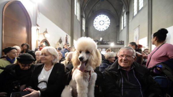 Особенность церкви Святой Риты в том, что это - единственная церковь, в которой не был запрещён вход на службу с животными. Они даже имели право на благословение в первое воскресенье ноября