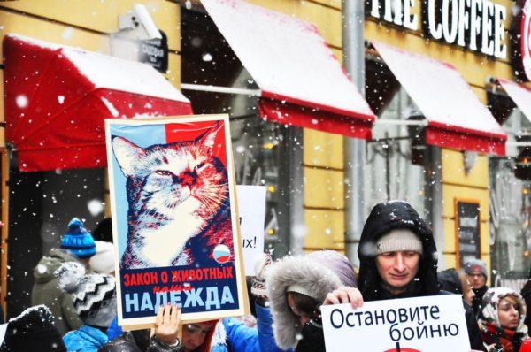 Во многих городах России прошли акции против живодёров. Основное требование пикетчиков — ужесточить наказание по статье 245 УК РФ «Жестокое обращение с животными» до 10 лет тюремного заключения